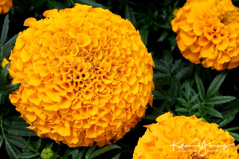 Flowered Orange