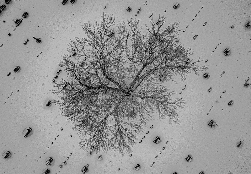 An Aerial View Of Snow-Covered Tree In Cemetery 2/7/21