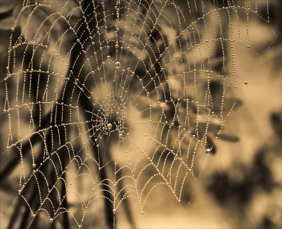 SPIDERWEB IN Sepia