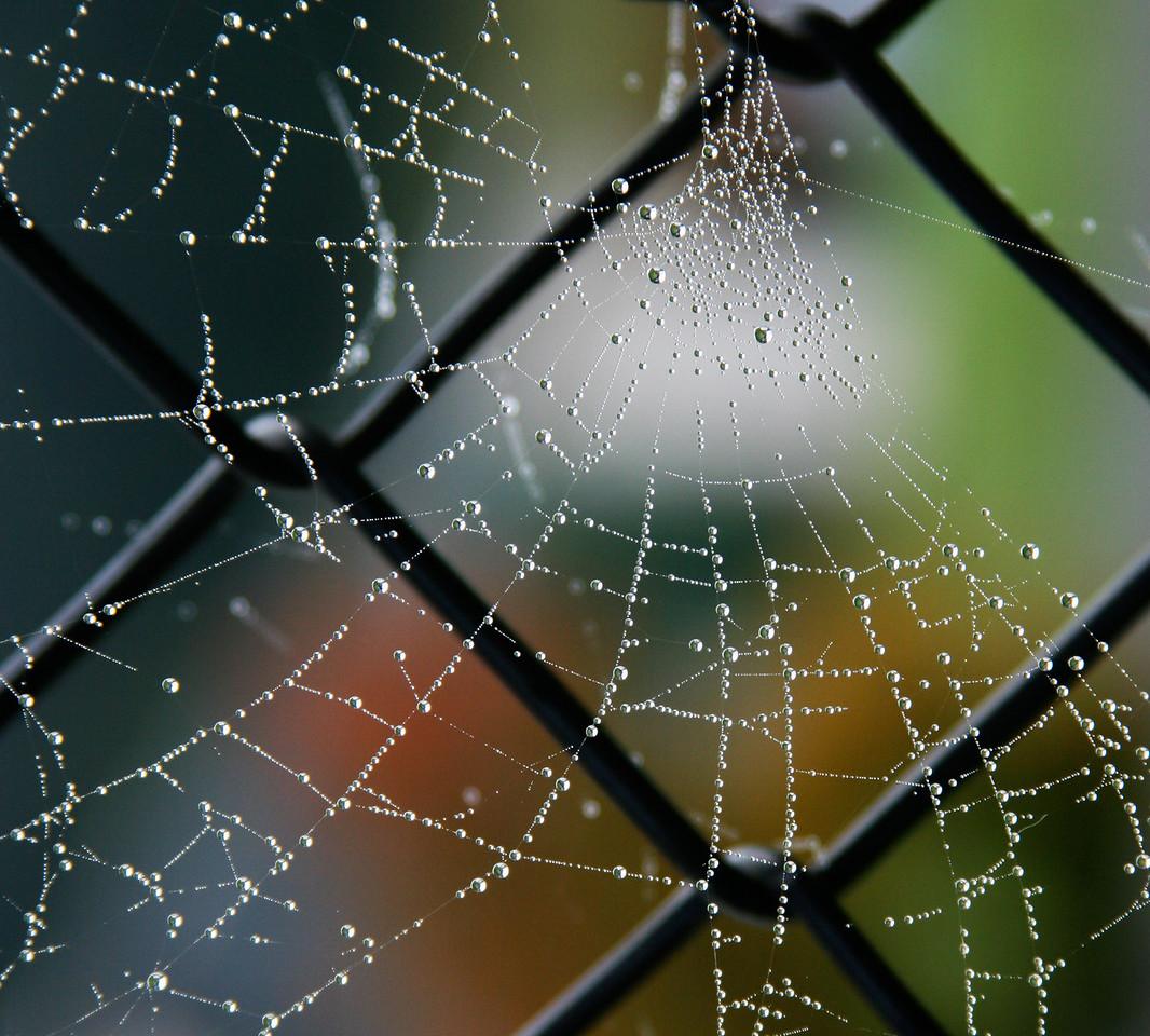 spiderweb on fence