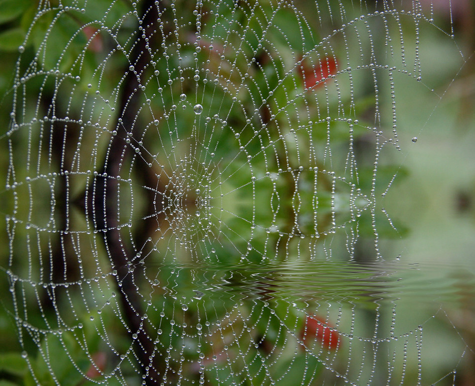 SPIDERWEB IN WATER
