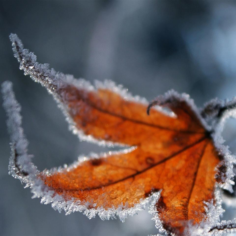 Fall vs Winter Square LG