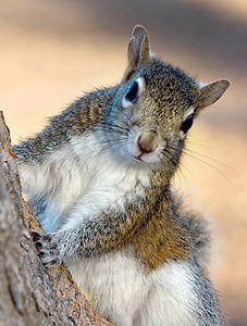 Looking Squirrely by Joe Colavita   Score:  9