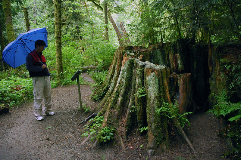 An ecotourist walks down a path in an old growth ancient rainforest - Stock Photo by Nature Photographer Christina Craft