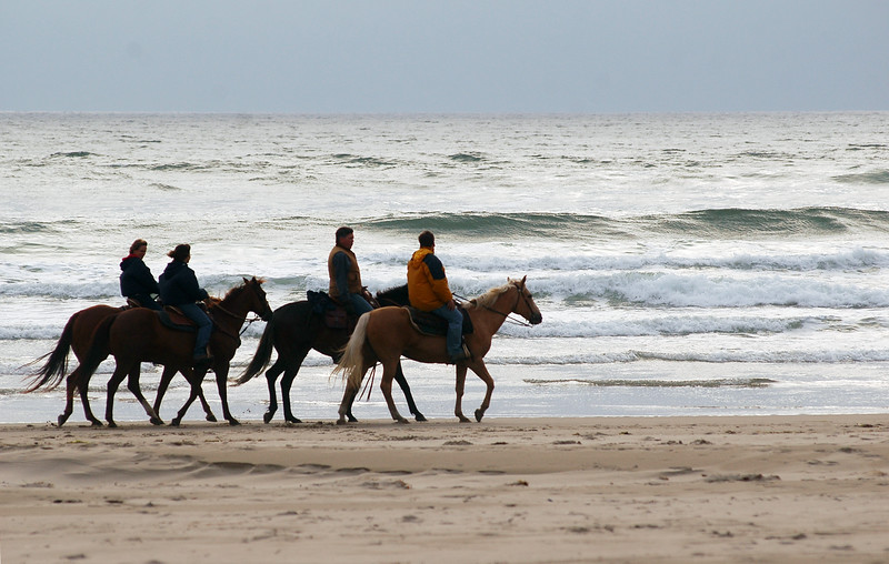 Horseback riding along a beach - tide and ocean - ecotourism- Nature Stock Image by Professional Nature Photographer Christina Craft