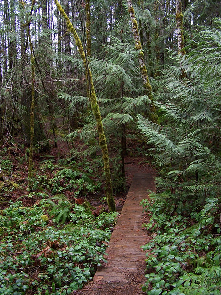 rainforest hiking trail