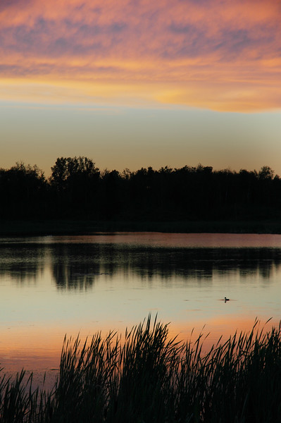 Vertical stock photograph of a duck swimming in a still lake at either dusk or dawn - silhouetted - Stock Photo by Nature Photographer Christina Craft