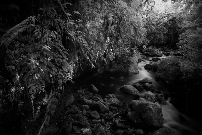 black and white infrared photograph of a river in the rain forest