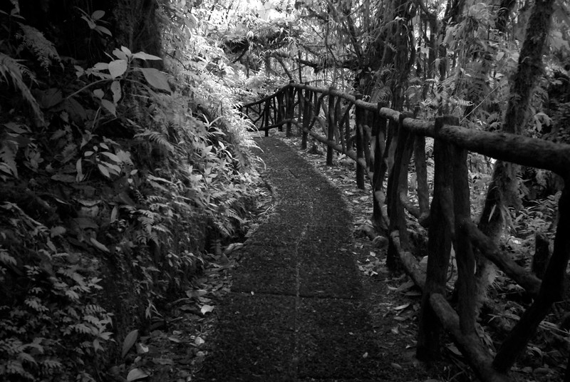 Infrared photograph (black and white) of a rainforest path