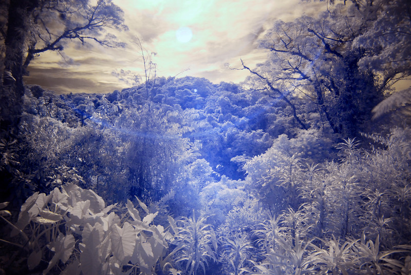 infrared_CCC9859