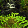 waterfall in a stream or brooke rainforest green ferns - Nature Stock Image by Professional Nature Photographer Christina Craft