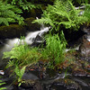 water flowing down a stream in a rainforest - Nature Stock Image by Professional Nature Photographer Christina Craft