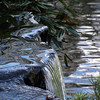 A waterfall <br /> <br /> Professional Nature Photography by Christina Craft of the Nature Stock Photography Library