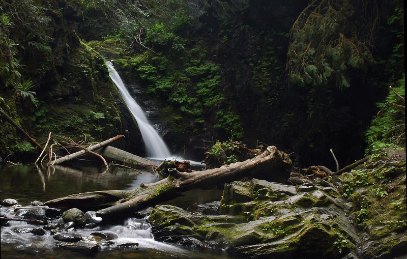 A small waterfall in an old growth rainforest
