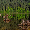 Rainforest clearcut - reflections onto a lake