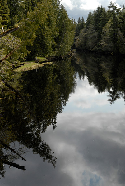 A vertical photograph of a rainforest lake with reflections.