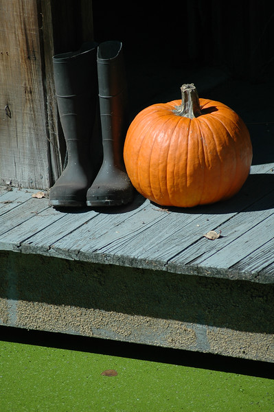 Pumpkin and rubber boots symbolize halloween - October seasonal picture <br /> <br /> Professional Nature Photography by Christina Craft of the Nature Stock Photography Library