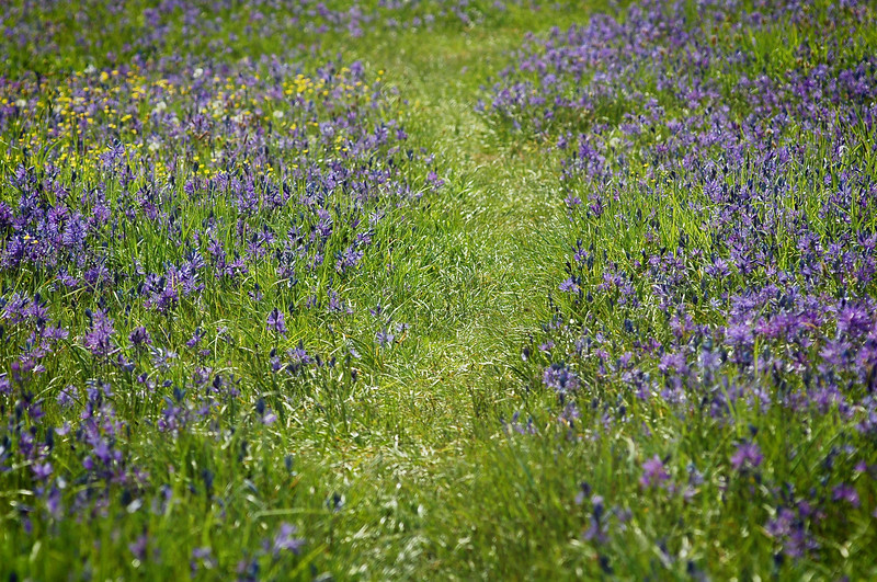 flowers in a meadow path - Nature Stock Image by Professional Nature Photographer Christina Craft