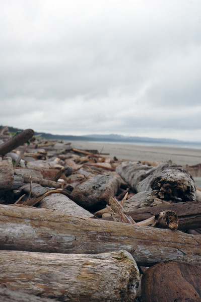 Drift Wood on a beach  - Nature Stock Image by Professional Nature Photographer Christina Craft