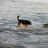 Dog walking in the water - Nature Stock Image by Professional Wildlife Photographer Christina Craft