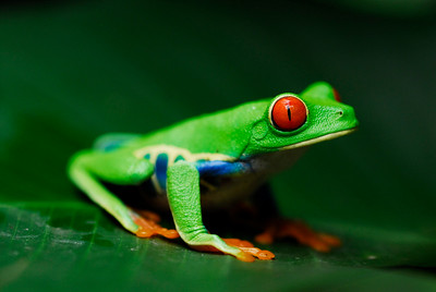 frog_CCC0182