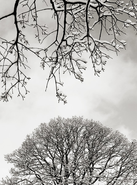 Vertical photo of tree branches filled with snow.