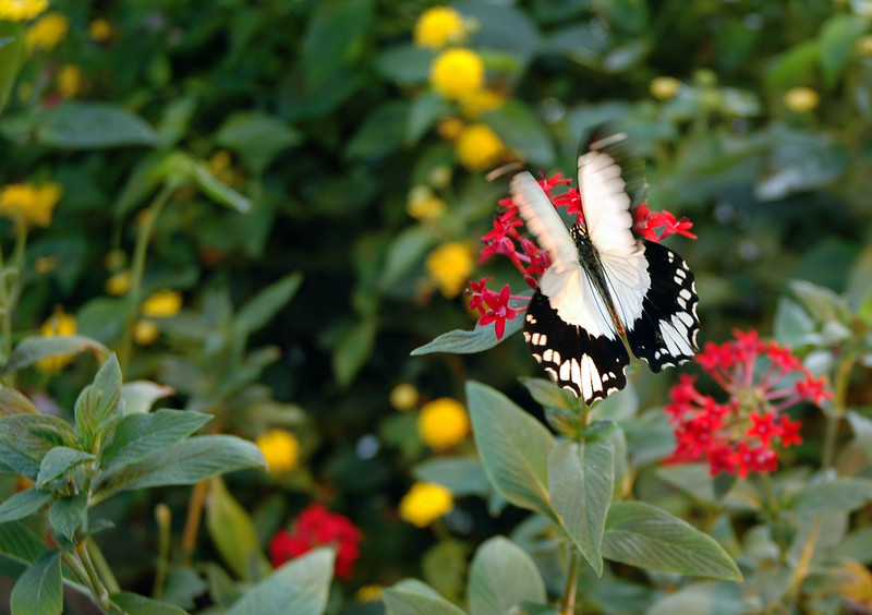 Butterfly <br /> <br /> Professional Wildlife Photography by Christina Craft of the Nature Stock Photography Library