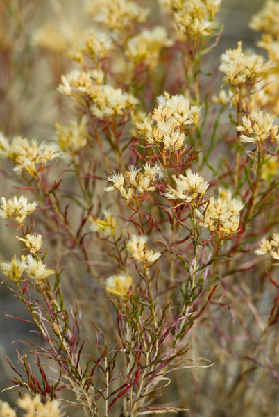 Yellow weeds - Nature Stock Photography by Christina Craft