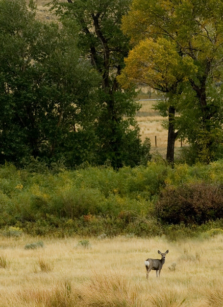 A lone doe deer - shot vertically - nature stock photography by Christina Craft - could be appropriate for a magazine. Lots of room for text.