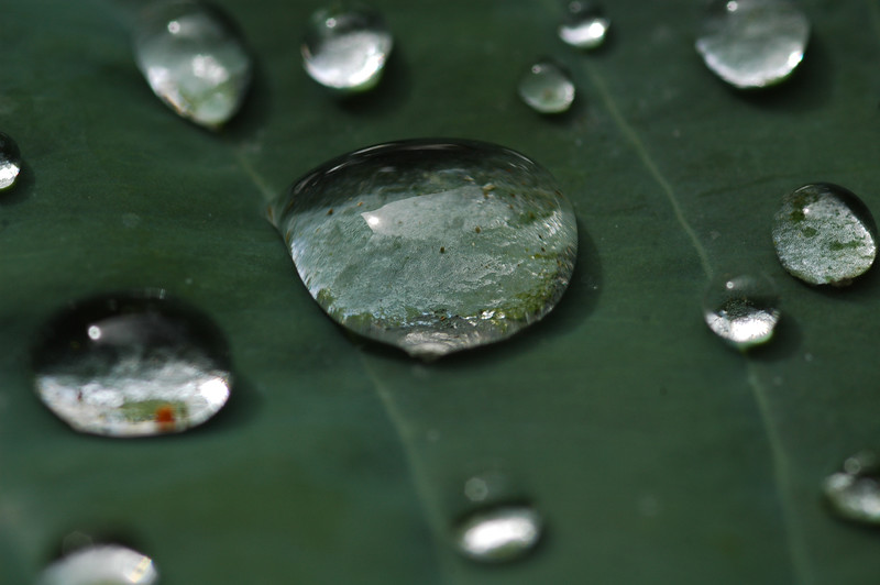 Droplets of rain on a leaf - Nature Stock Image by Professional Nature Photographer Christina Craft