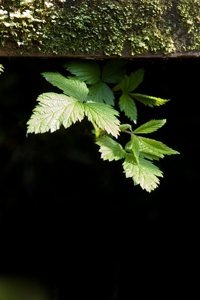 A leaf pokes out from under a stair along a nature trail boardwalk in the rainforest