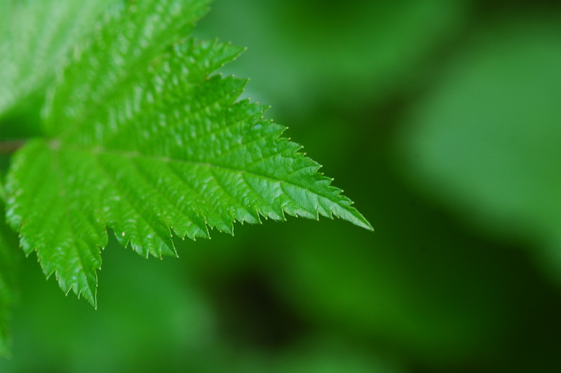 Macro of a leaf - green scene - Nature Stock Image by Professional Nature Photographer Christina Craft