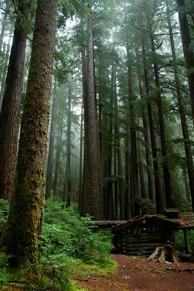 Log house in an old growth rainforest<br /> Professional Nature Photography by Christina Craft of the Nature Stock Photography Library
