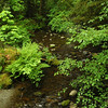 old growth rainforest - a stream / river