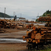 Lumber yard environmental photography - Stock Photo by Nature Photographer Christina Craft