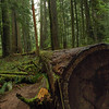 Fallen tree in a rainforest - green - Stock Photo by Nature Photographer Christina Craft