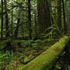 Rainforest - Stock Photo by Nature Photographer Christina Craft