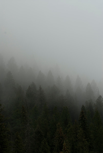 Fog rolls in during early morning in a forest