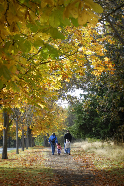A family walks down a trail surrounded by autumn leaves - seasonal stock photography