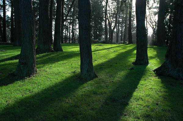 Sun streaming through some trees along green grass - Nature Stock Image - Professional Nature Photography by Nature and Wildlife Photographer Christina Craft