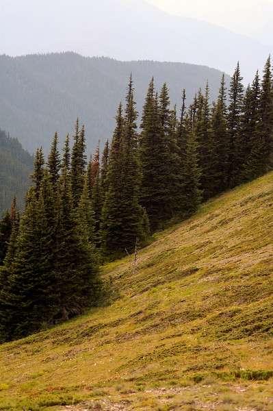 Olympic National Park <br /> Professional Nature Photography by Christina Craft of the Nature Stock Photography Library