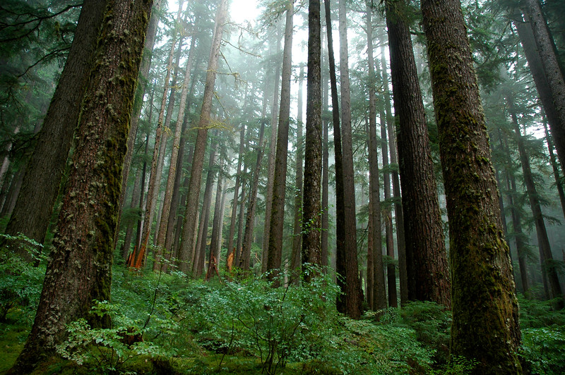 Olympic National Park - Washington State USA<br /> Professional Nature Photography by Christina Craft of the Nature Stock Photography Library