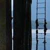 A ladder under a dock Stock Photo by Nature Photographer Christina Craft