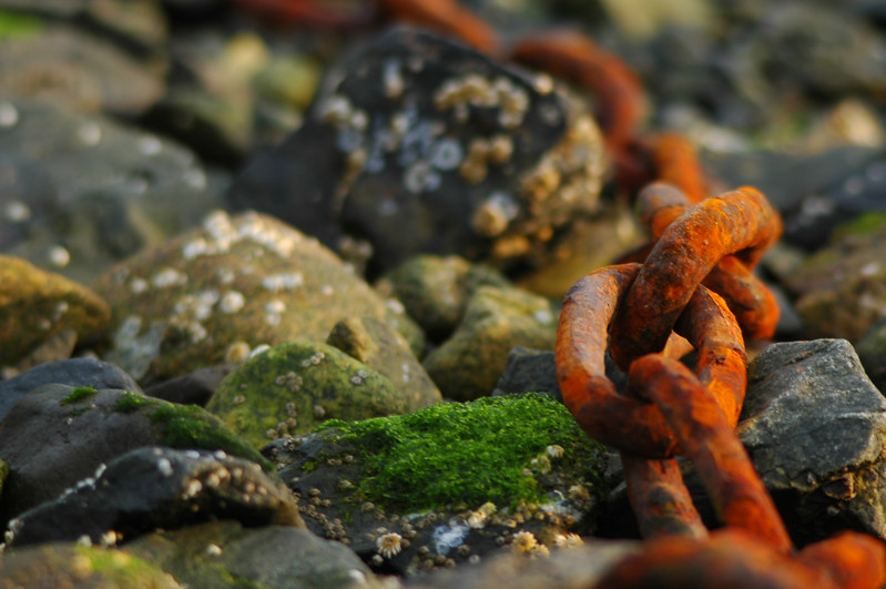 Rusty chain - Stock Photo by Nature Photographer Christina Craft