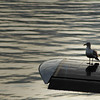 seagull sitting on a float plane - Stock Photo by Nature Photographer Christina Craft