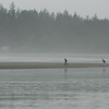 People walking into the tide on a westcoast beach - Stock Photo by Nature Photographer Christina Craft
