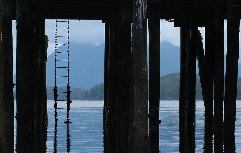 A ladder under a dock - Stock Photo by Nature Photographer Christina Craft