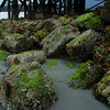 seaweed on rocks at low tide - Stock Photo by Nature Photographer Christina Craft