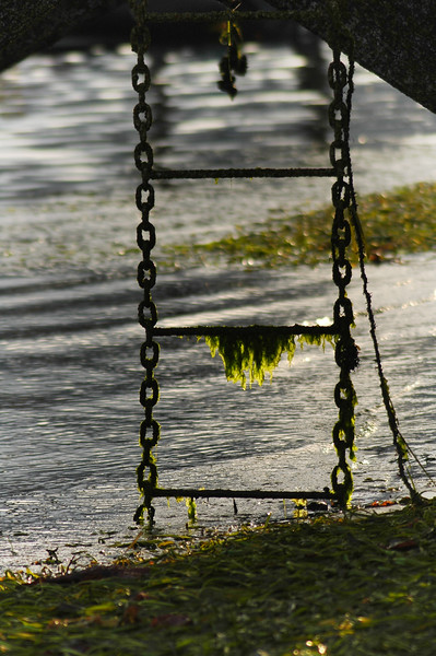 seaweed on a rusty ladder - Stock Photo by Nature Photographer Christina Craft