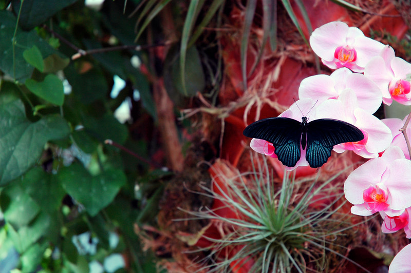 Butterfly<br /> Professional Wildlife Photography by Christina Craft of the Nature Stock Photography Library